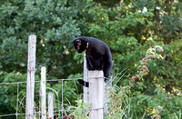 Ciara on Fence Post
