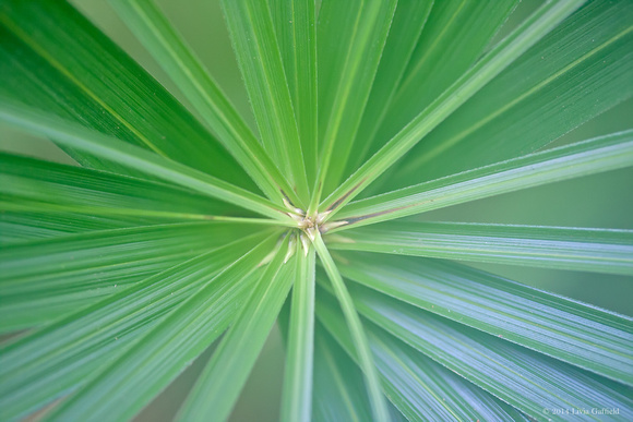 Palm leaf center radiating  blue green striped